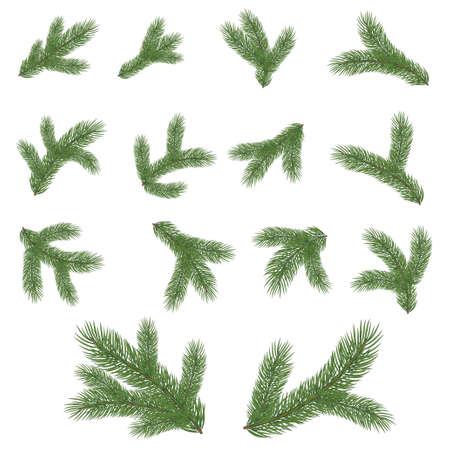 Fichte Zweig . Vektor-Illustration Standard-Bild - 95628057