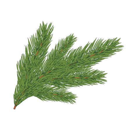 Green lush spruce branch