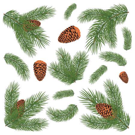 Green lush spruce branch set Illustration