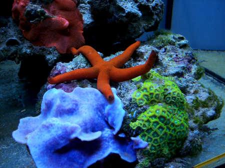 stelle marine e coralli Zoanthus