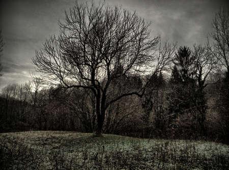 albero nostalgico Archivio Fotografico