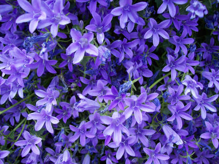 violets: violets