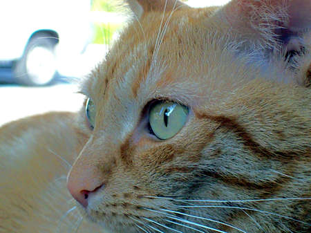 Red Cat Archivio Fotografico
