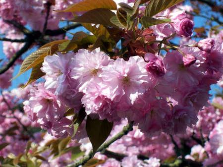 fiori Archivio Fotografico