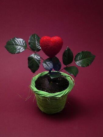 Heart in pot Stock Photo - 304794