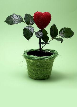 Heart in pot Stock Photo - 304781