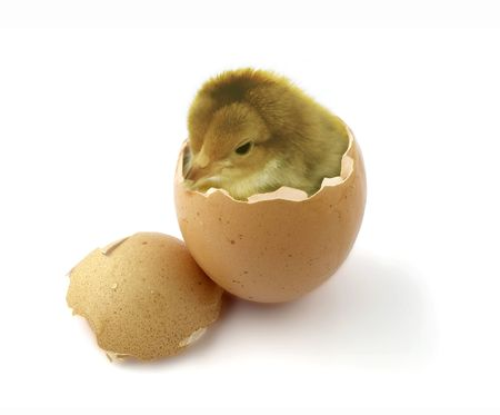 Chicken in egg Stock Photo