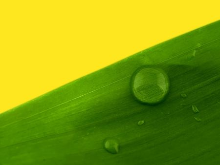 Waterdrop on a leaf Zdjęcie Seryjne