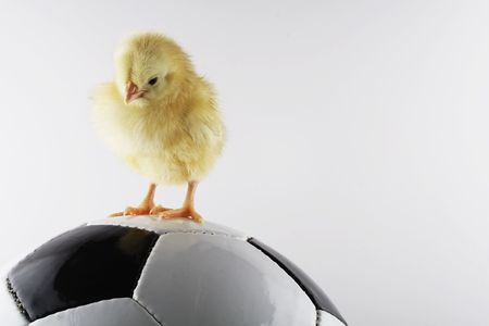 chicken and ball Stock Photo