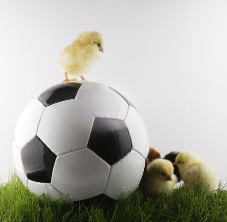 kurcząt i piłka