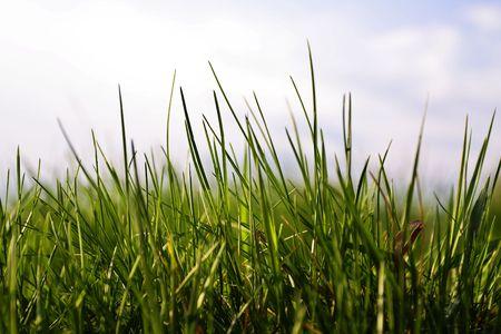 Grass Zdjęcie Seryjne