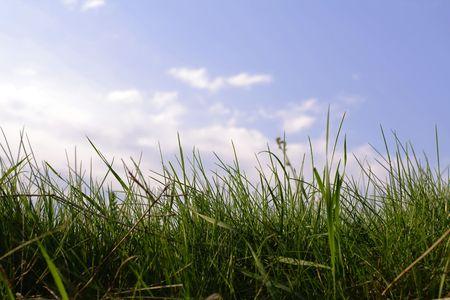 botanist: Grass Stock Photo
