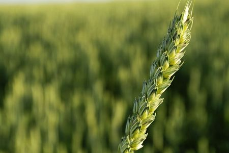 agriculture Stock Photo - 478162