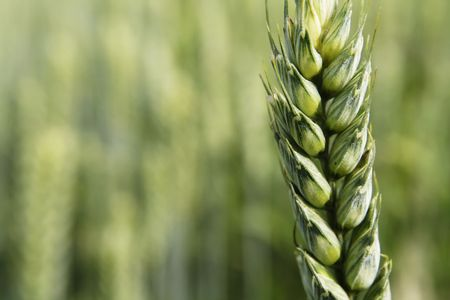 tierra fertil: Agricultura