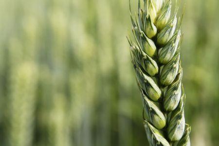 rolnictwa Zdjęcie Seryjne