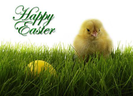 Wielkanoc kurczaka i pisanka Zdjęcie Seryjne - 689556
