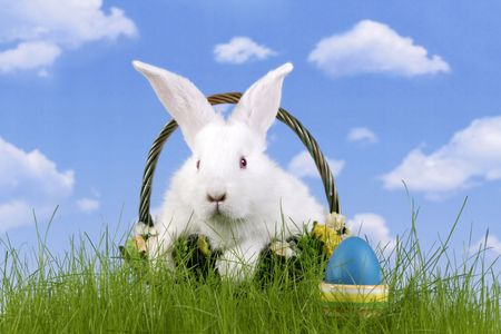 Easter. The rabbit and a easter egg with a sky background  photo