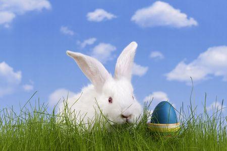 Wielkanoc. W królik i easter egg z nieba tle