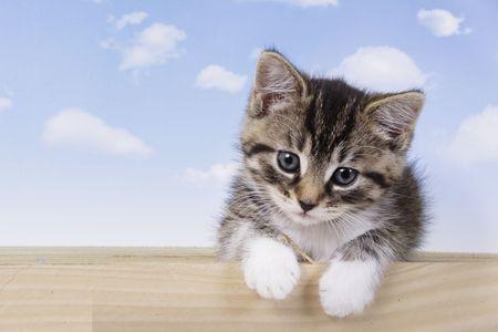 A little kitten - fluffy pets Zdjęcie Seryjne - 2236386