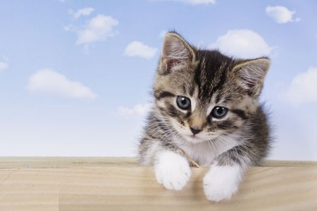 Niewiele kitt - fluffy zwierząt domowych  Zdjęcie Seryjne