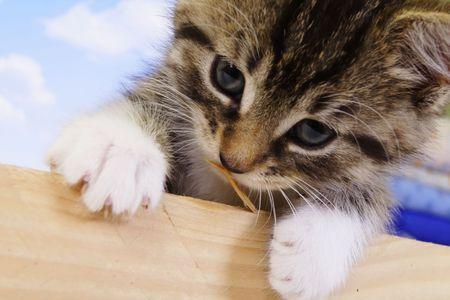 Mały Kitt - fluffy zwierzęta domowe