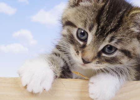 Mały kotek - puszysty zwierzęta