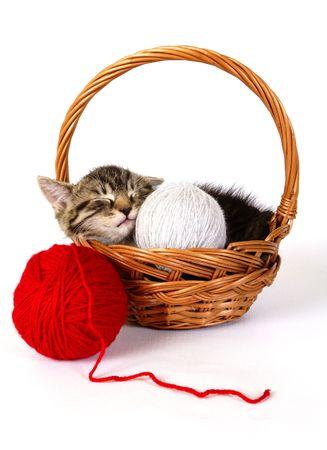 A little kitten - puszysty zwierzęta Zdjęcie Seryjne