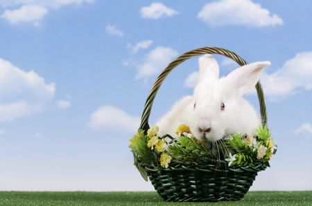 Easter. The rabbit with a sky background Stock Photo