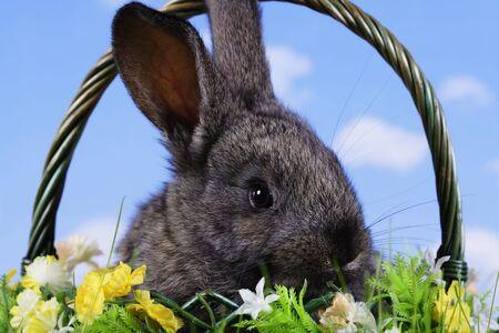 Wielkanoc. Królik z tła nieba