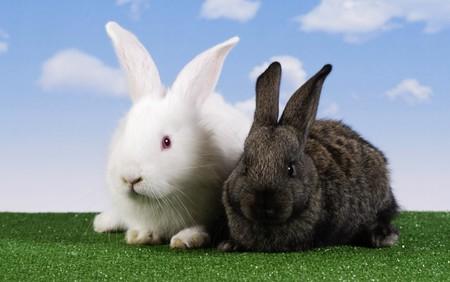 Wielkanoc. W królik z nieba tle