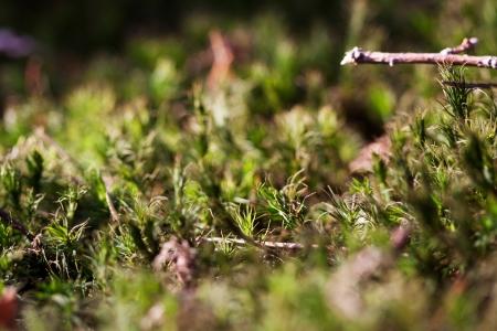 Makro- fotografia mech w deciduous lesie Zdjęcie Seryjne