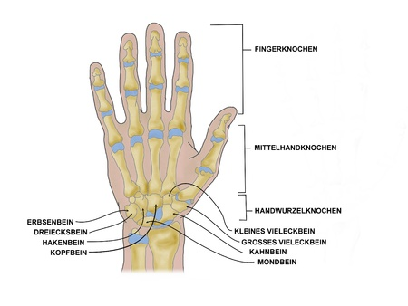 carpal tunnel: the hand