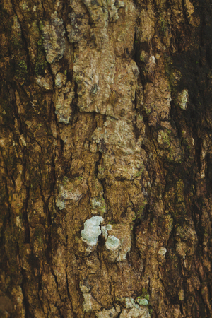 Texture of the brown bark of a tree, bark in the forest, tree bark texture. Stock Photo
