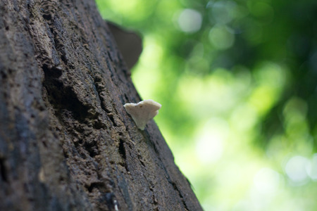 Mushrooms on a tree in the forest, selective focus. Stockfoto - 123248770