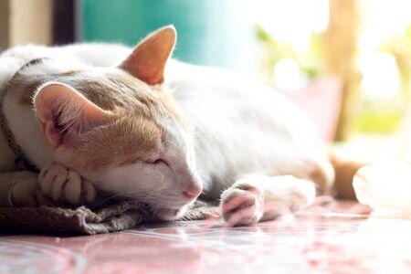 Close up portrait of cute domestic  cat.