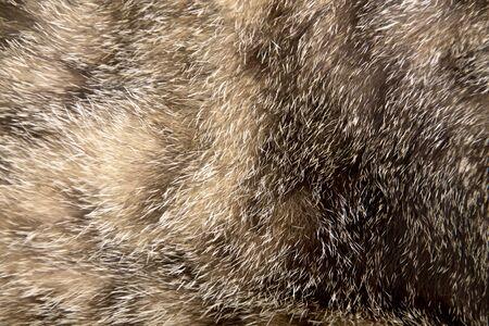 Soft focus of the cat's fur.
