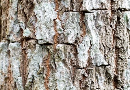 Texture of the brown bark of a tree, bark in the forest, tree bark texture. Archivio Fotografico