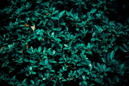 Green leaves background, abstract green leaves texture.