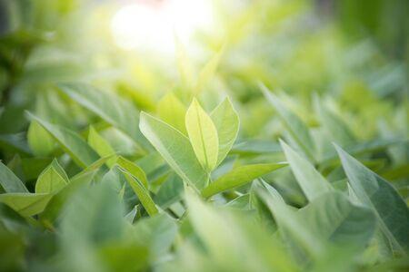Closeup nature of fresh green leaf background. Archivio Fotografico