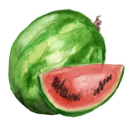 watercolor illustration of a watermelon Illustration