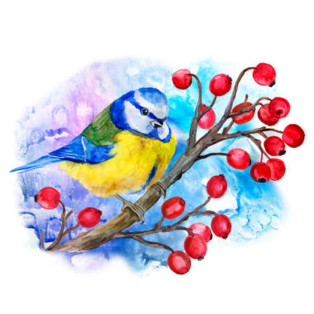 viburnum: Watercolor titmouse  on branch of  viburnum isolated on blue background. T-shirt graphics. For fashion print, poster, textile. Decoration with wild winter bird. Watercolor hand drawn illustration.