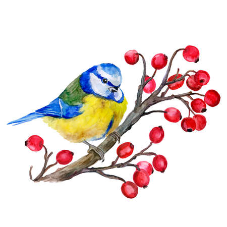 viburnum: Titmouse on a branch. Birds background.  Decoration with wild winter bird. Watercolor hand drawn illustration. Tit on the viburnum. T-shirt graphics.  For fashion print, poster, textile. Greeting card