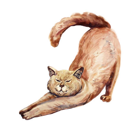 Watercolor cute red hair cat stretching against white background.  Hand drawn sweet home pet. Bright colors, realistic look. Closed eyes. Greeting card design. Clip art. Add any text