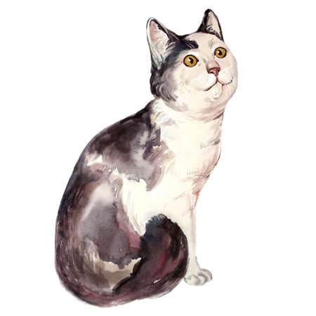 stinky: Watercolor illustration of ugly cat looking confused. Dumb face cat. Stupid kitten. Unattractive face. Hand drawn home pet. Greeting card design. Clip art. Add text. Domestic animal