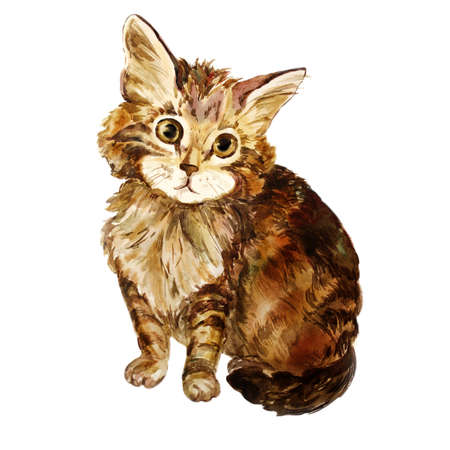 longhair: Watercolor portrait of tricolor longhair cat isolated on white background. Hand drawn sweet home pet. Bright colors, realistic look. Emerald eyes. Greeting card design. Clip art. Add any text Stock Photo