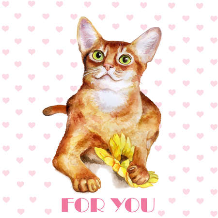 abyssinian: Greeting card design. Watercolor portrait of abyssinian cute cat isolated on white background. Hand drawn sweet home pet. Bright colors, realistic design. Clip art. For any event