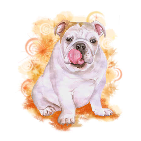 provincial: Watercolor portrait of white English or British bulldog breed dog isolated on orange background. Hand drawn sweet pet. Bright colors, realistic look. Greeting card design. Clip art. Add your text Stock Photo