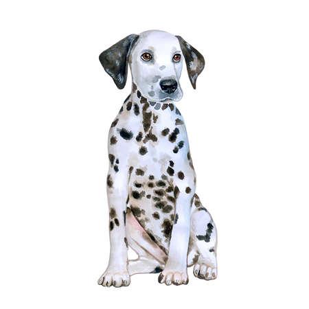 검은 점에서 흰색의 수채화 초상화 Dalmatain 품종 개가 흰색 배경에 고립. 손으로 그린 달콤한 애완 동물입니다. 밝은 색상, 사실적인 표정. 인사말