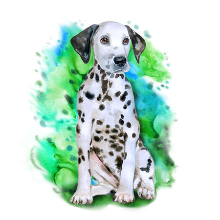 Watercolor portrait of white in black dots Dalmatain breed dog isolated on green background. Hand drawn sweet pet. Bright colors, realistic look. Greeting card design. Clip art. Add your text