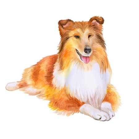 Aquarel portret van rode Collie of Sheltie, Shetland herdershond ras hond op een witte achtergrond. Hand getrokken lief huisdier. Heldere kleuren, realistische look. Wenskaart design. Clip art. Voeg tekst toe Stockfoto
